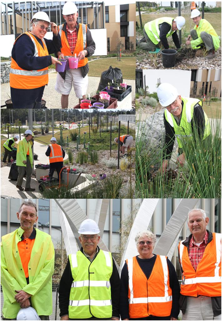 Members of the Species Orchid Society of WA replanting native orchids at Fiona Stanley Hospital